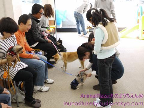 犬のしつけ東京世田谷目黒「犬のようちえん®駒沢公園教室」パピーパティー1