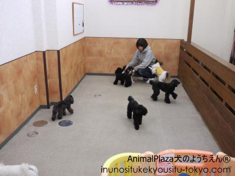 犬のようちえん®駒沢公園教室 小型犬ルーム