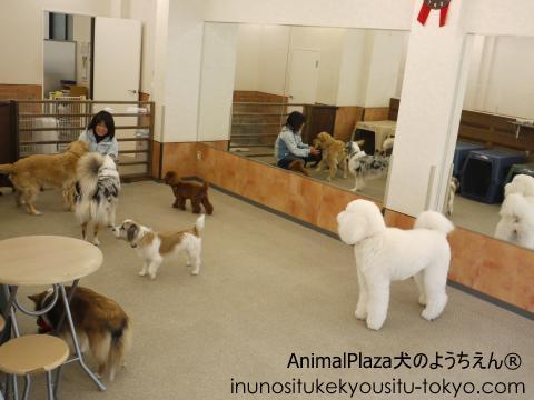 犬のようちえん® 駒沢公園教室 大型犬ルーム