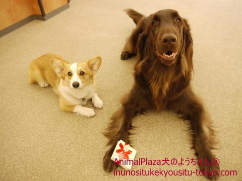 犬のしつけ東京世田谷目黒、「犬のようちえん®駒沢公園教室」