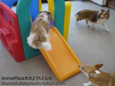 犬のようちえん®駒沢公園教室