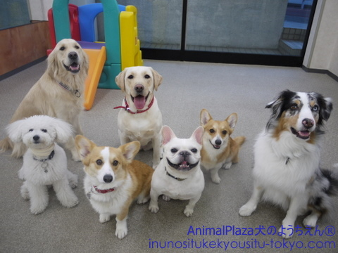 犬のようちえん® 駒沢公園教室