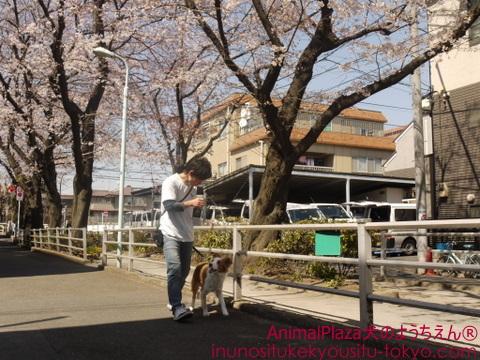 犬のしつけ東京目黒世田谷「犬のようちえん」お散歩コース1