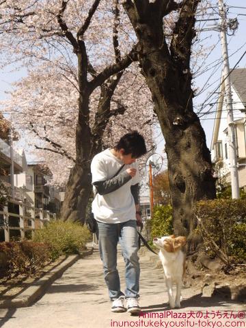 犬のしつけ東京目黒世田谷「犬のようちえん」お散歩コース2