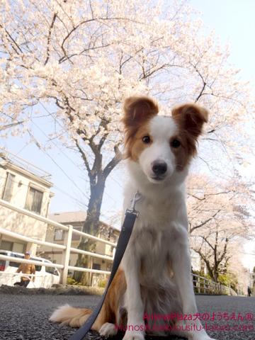 犬のしつけ東京目黒世田谷「犬のようちえん」お散歩コース3