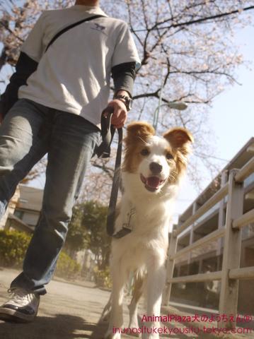 犬のしつけ東京目黒世田谷「犬のようちえん」お散歩コース4