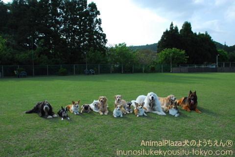 犬のようちえん® 駒沢公園教室 遠足