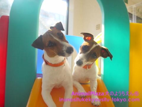 子犬のしつけ教室「犬のようちえん駒沢公園教室」きょうだい3