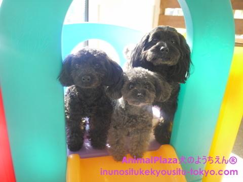 子犬のしつけ教室「犬のようちえん駒沢公園教室」きょうだい2