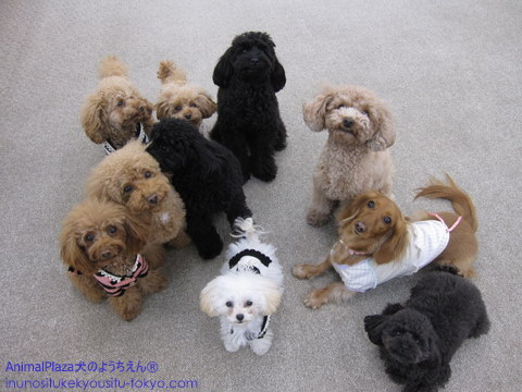 子犬のしつけ教室「犬のようちえん駒沢公園教室」キャンペーン