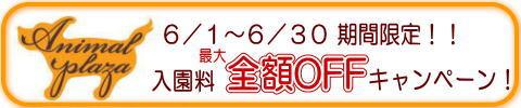 犬のようちえん駒沢公園教室入園料全額OFFキャンペーン2011