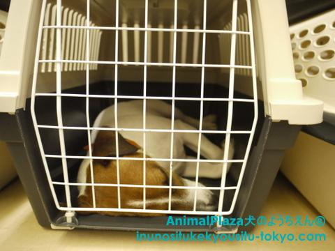 子犬のしつけ教室「犬のようちえん駒沢公園教室」ハウストレーニング3