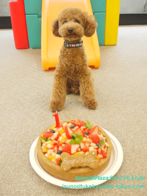 子犬のしつけ教室「犬のようちえん駒沢公園教室」チャーリー1