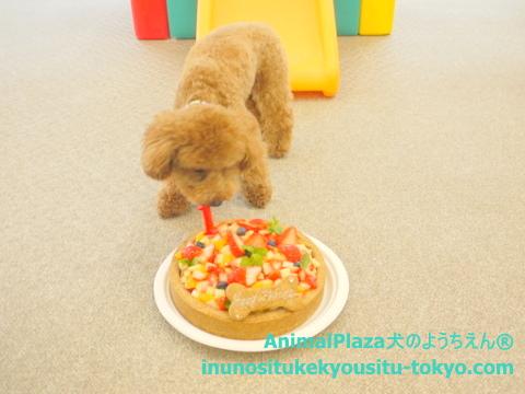 子犬のしつけ教室「犬のようちえん駒沢公園教室」チャーリー2