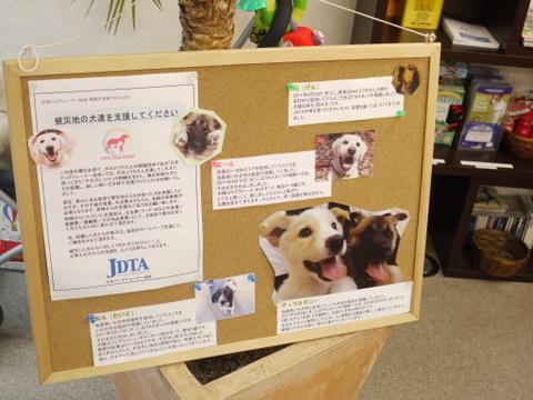 子犬のしつけ教室「犬のようちえん駒沢公園教室」保護犬支援プロジェクト2