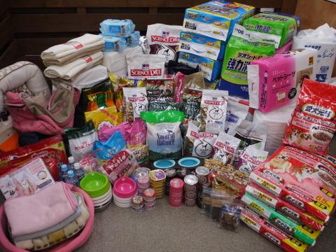 子犬のしつけ教室「犬のようちえん駒沢公園教室」保護犬支援プロジェクト報告