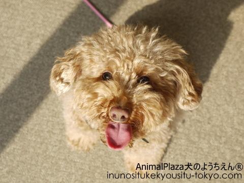 子犬のしつけ教室「犬のようちえん駒沢公園教室」同窓会♪2