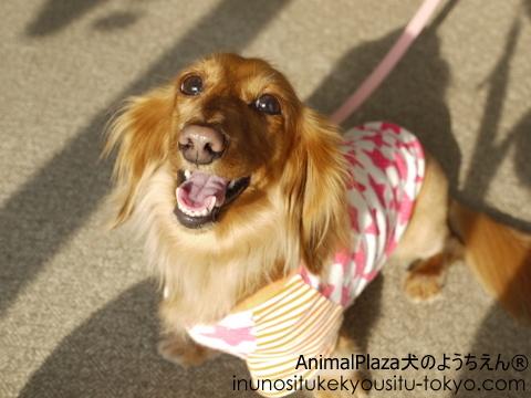 子犬のしつけ教室「犬のようちえん駒沢公園教室」同窓会♪