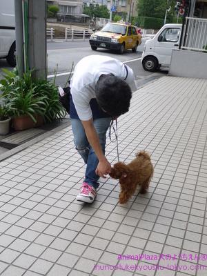 子犬のしつけ教室,犬のようちえん駒沢公園教室,レッスン