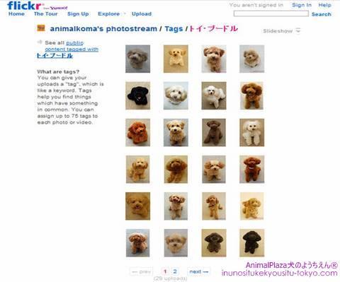子犬のしつけ教室「犬のようちえん駒沢公園教室」Flickr