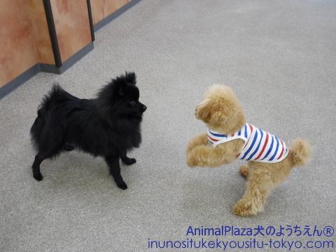 子犬のしつけ教室「犬のようちえん駒沢公園教室」梅雨の過ごし方2