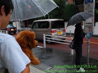 子犬のしつけ教室「犬のようちえん駒沢公園教室」梅雨の過ごし方3