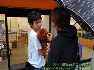 子犬のしつけ教室「犬のようちえん駒沢公園教室」梅雨の過ごし方4