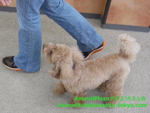 子犬のしつけ教室「犬のようちえん駒沢公園教室」1日のスケジュール2
