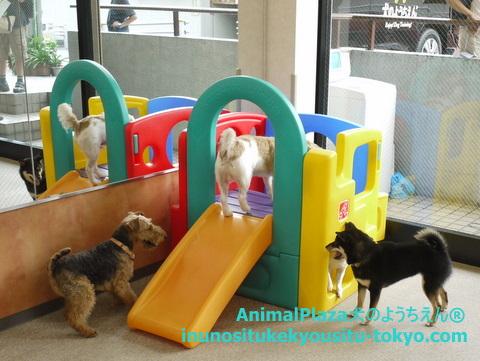 子犬のしつけ教室「犬のようちえん駒沢公園教室」1日のスケジュール1