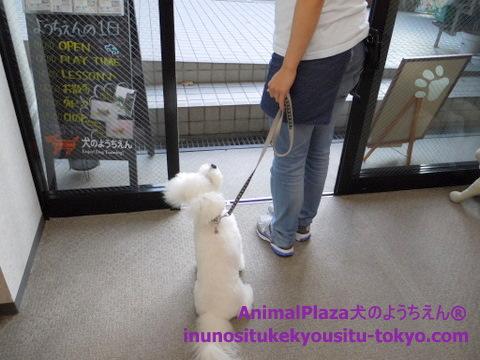 子犬のしつけ教室「犬のようちえん駒沢公園教室」1日のスケジュール3