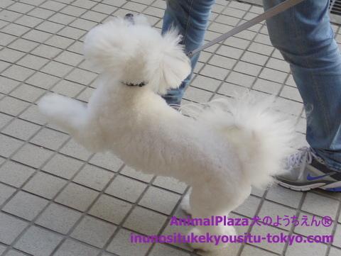 子犬のしつけ教室「犬のようちえん駒沢公園教室」1日のスケジュール4