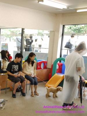 子犬のしつけ教室「犬のようちえん駒沢公園教室」パピーパーティー4