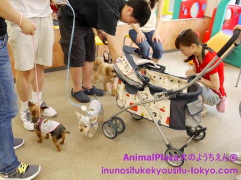 子犬のしつけ教室「犬のようちえん駒沢公園教室」パピーパーティー6