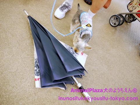 子犬のしつけ教室「犬のようちえん駒沢公園教室」パピーパーティー5