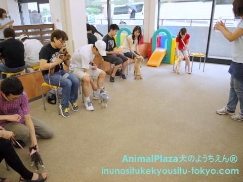 子犬のしつけ教室「犬のようちえん駒沢公園教室」パピーパーティー7
