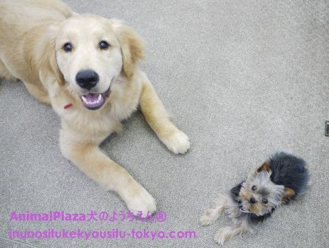 子犬のしつけ教室「犬のようちえん駒沢公園教室」無料しつけ相談1