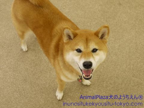 子犬のしつけ教室「犬のようちえん駒沢公園教室」七夕