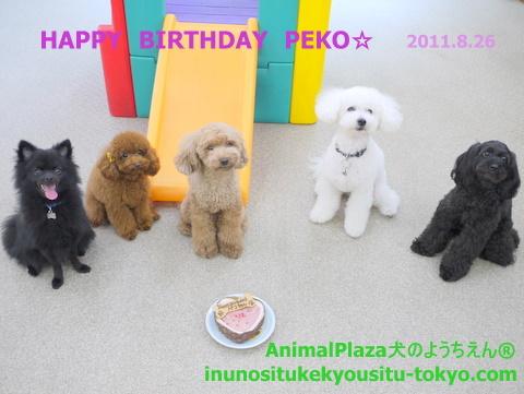 子犬のしつけ教室「犬のようちえん駒沢公園教室」ペコちゃんお誕生日2