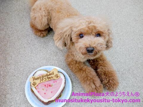 子犬のしつけ教室「犬のようちえん駒沢公園教室」ペコちゃんお誕生日3