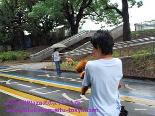 子犬のしつけ教室「犬のようちえん駒沢公園教室」夏のお散歩2