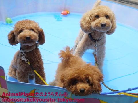 子犬のしつけ教室「犬のようちえん駒沢公園教室」プール1