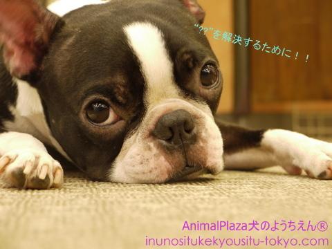 子犬のしつけ教室「犬のようちえん駒沢公園教室」見学会