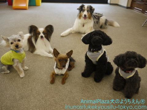 子犬のしつけ教室「犬のようちえん駒沢公園教室」夏休み