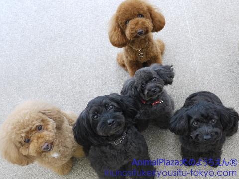子犬のしつけ教室「犬のようちえん駒沢公園教室」見学会2