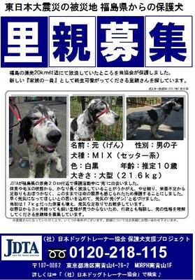 保護犬支援プロジェクト 里親募集