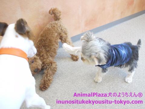 子犬のしつけ教室「犬のようちえん駒沢公園教室」子犬の遊び方4