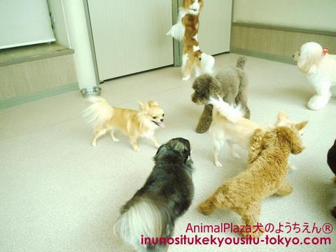 子犬のしつけ教室「犬のようちえん駒沢公園教室」お泊りサービス