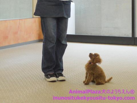 子犬のしつけ教室「犬のようちえん駒沢公園教室」授業参観1