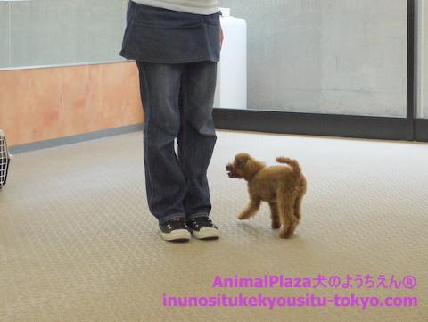 子犬のしつけ教室「犬のようちえん駒沢公園教室」授業参観2