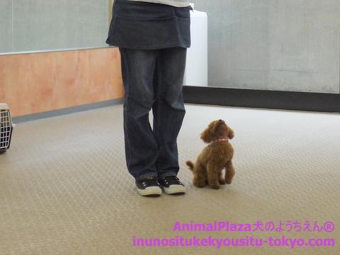 子犬のしつけ教室「犬のようちえん駒沢公園教室」授業参観3